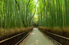 Bambushain in Arashiyama, Kyoto