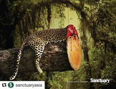 "One of the MOST powerful campaigns of our time by @sanctuaryasia. ""When the woods go. Wildlife goes."" And wildlife goes, we go."