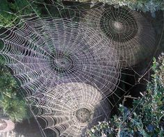 Webs of Wyrd... beautiful, but I'd run like hell.