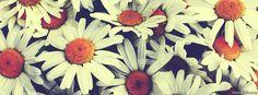 flores para portada de facebook - Buscar con Google