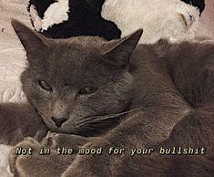 Cotecristihak Mood, Cats, Animals, Gatos, Kitty Cats, Animaux, Animal, Cat, Animales