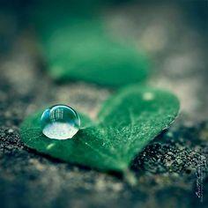Macro Water Drop Photography | Very Beautiful and creative macro photography of water and dew drops ...