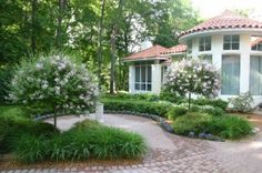 Dwarf Korean Lilac Tree Form Along With Chicagoland Green Boxwood Surround This Formal Brick Paver Patio
