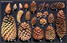 great website!!! plant phylums classification - Google Search