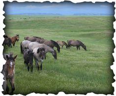 Windcross Conservancy - Spanish Mustang Preserve near Hot Springs KOA
