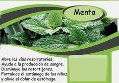 Agua de menta#  نعناع # Mint Plant Leaves, Barcelona, Plants, Mint Water, Herbalism, Barcelona Spain, Plant, Planets