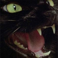 The third and final appearance this Halloween season from Poe's fearsome feline, and the first for both Argento and Romero, Two Evil Eyes. Dark Fantasy, Slytherin Aesthetic, Angry Cat, Warrior Cats, Crazy Cats, Cats And Kittens, Cute Cats, Cute Animals, Halloween