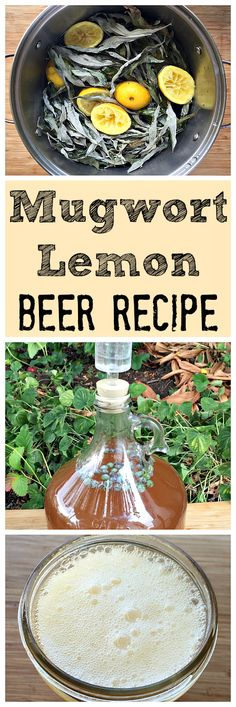 Brew a primitive mugwort lemon brew with foraged ingredients. Easy to make and tasty!