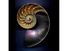 Photography For Sale | Nautilus-1 | ArtsyHome