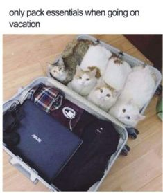 Best Cat Memes That Will Just Steal Your Heart (50+ Pictures) - Page 3 of 5 - LADnow