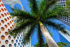 La bella ciudad de #Miami está dividida en trece barrios distintos con diferentes rasgos distintivos, en donde el ambiente caribeño se mezcla con las costumbres norteamericanas. http://www.bestday.com.mx/Las-Vegas-area-Nevada/ReservaHoteles/