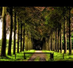 A forest in Belgium
