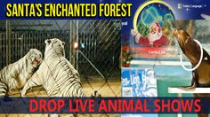 Please sign totell Santa's Enchanted Forest owner BrianShechtman that we want to see animal-free entertainment! Santa's Enchanted Forest is a popular Miami holiday attraction featuring light displays, carnival type rides and food.  Unfortunately they also have a tiger show, sea lion show and a monkey...