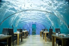 Underwater restaurant in Dubai. Wanted to go since the first time I saw this photo in highschool.