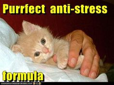 Purrfect anti-stress formula