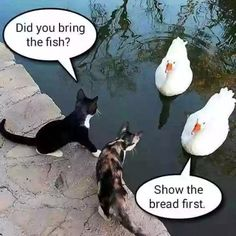 Show us tge bread first!