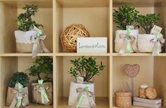 BOMBONIERE 2014: BONSAI E PIANTINE GRASSE COME CADEAU DEL MATRIMONIO By www.SomethingTiffanyBlue.com #BOMBONIERE #WEDDING #MATRIMONIO