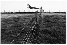 Fay Godwin - I saw her Landmarks exhibition in 2001 at the Barbican and fell in love.  Portraits, landscapes, animals, comedy, Yorkshire, London, Kent, colour, black & white - she did it all very well. Black And White Dog, Black And White Landscape, Lurcher, Wild Dogs, British Library, Belle Photo, Black And White Photography, Animal Kingdom, Female Art