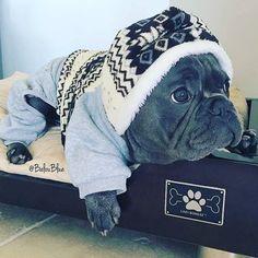 Está desagradável lá fora  Follow: @odonocuida . . #dog #dogsofinstagram #dogs #instadog #dogstagram #doglover #ilovemydog #dogoftheday #lovedogs #dogsofinsta #instagramdogs #doglife #doglovers #dogsofig #cutedog #doglove #dogslife #caesdeportugal #caesdosportugueses #puppylove #petstagram #instapets #cutepets #pets #puppydog #cutedogs #portugal