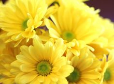 It's almost time for yellow flowers in the yard!