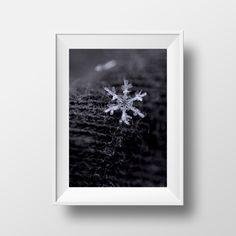 Snowflake Photography by Carol Sue Bentley - Daydreams & Dragonflies