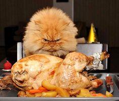grumpy cat turkey