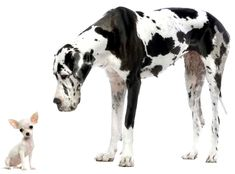 small dog breeds that don't shed | Dog Breeds A-Z List of Small to Large Dog Breeds