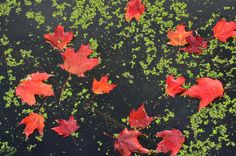 Fall colors: autumn foliage across North America – in pictures