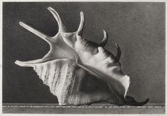 Scorpione di Mare - 2011 matita contè su cartone schoeller cm 37x51 © Gianluca Corona