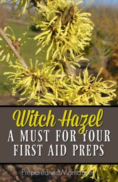 The Wonders of Witch Hazel - A Must Have for Your First Aid Preparations Witch Hazel is such a wonderful and necessary addition to your medicine cabinet. It is beneficial for all skin types. Use it to make an herbal infusion Natural Health Remedies, Natural Cures, Natural Healing, Herbal Remedies, Natural Treatments, Natural Oil, Cold Remedies, Natural Foods, Bloating Remedies