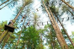 Go Ape - Adventure at Sherwood Pines, Nottinghamshire.