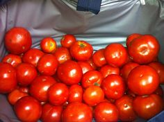 It's A Happy Tomato Morning thanks to our Hygienist Pam for bring all these maters in....Stop by and join us for BLT Wednesday tomorrow!!!!