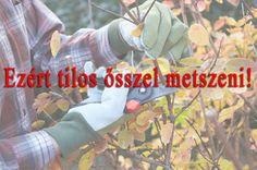 Soha ne metszd a növényeket ősszel! Baseball Cards, Plants, Plant, Planets