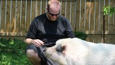 Pig roaster-turned-animal lover fights for right to keep pet hogs in backyard Huron County, Pot Belly Pigs, Pet Pigs, Backyard, Pets, Training, Animals, Link, Patio
