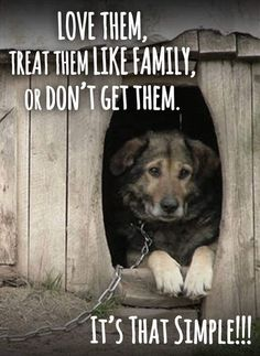 I hate to see animals abused by ignorant people. Amor Animal, Stop Animal Cruelty, Jolie Photo, Animal Quotes, Save Animals Quotes, Dog Care, I Love Dogs, Animal Rescue, Animal Testing