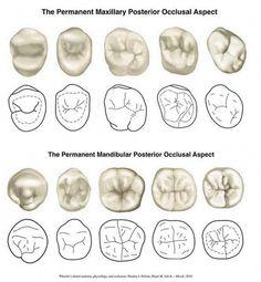 Eight Dental Hygienist Girls Dental World, Dental Life, Dental Art, Dental Teeth, Dental Braces, Teeth Braces, Dental Assistant Study, Dental Hygiene Student, Dental Hygienist