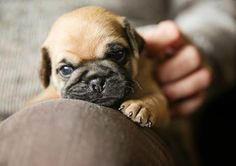 25 Puppies Stock Photos To Make You Smile