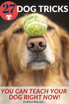 Regardless of what type of dog you have, here's some of our favorite tricks you can teach them.  We have complied 27 different tricks you can teach your dog today! #LoveYourDog #DogTricks #DogTraining #DogTips #Dog #Dogs
