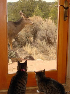 Buddy and Lulu commune with the wildlife