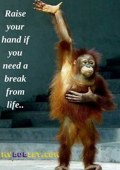 Quotes for Fun QUOTATION - Image : As the quote says - Description Funny Quotes - Funny PHOTOS - Raise your hand if you need a break from life. Find out Funny Good Morning Quotes, Dog Quotes Funny, Funny Animal Memes, Funny Stress Quotes, Stressed Out Quotes, Really Funny Quotes, Clever Quotes, Fun Quotes, Funny Animals