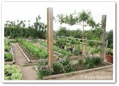 Espalier and vegetables