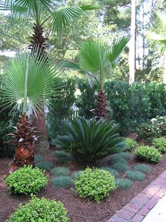 Get guidelines for loving a stunning Florida Gardening, landscape, or yard. Our experts inform you everything you need to actually florida gardening Tropical Pool Landscaping, Palm Trees Landscaping, Florida Landscaping, Florida Gardening, Outdoor Landscaping, Tropical Garden, Front Yard Landscaping, Outdoor Gardens, Landscape Design Plans
