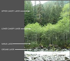 Layers of the forest from snohomish county public works