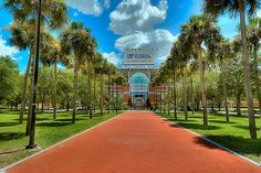 This picture was taken in Gainesvillle, Florida at the University of Florida. It is the front of the Ben Hill Griffin Stadium - Home of the Florida Gators. Colleges In Florida, University Of Florida, Florida Girl, Old Florida, Florida Living, Florida Gators Football, Uf Gator, College Football, Ben Hill
