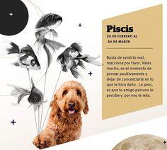 Horóscopo Canino según el Reiki #Piscis #Revista #SeBuscaPerroExtraordinario