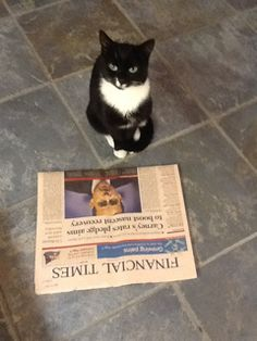 They will be the first to the morning's headlines #CatTakeover www.battersea.org.uk/CatTakeover