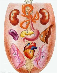 Wygląd języka a stan zdrowia Yoga Anatomy, Traditional Chinese Medicine, Acupuncture, Ayurveda, Natural Remedies, Health And Beauty, Health Fitness, Healthy, Medical