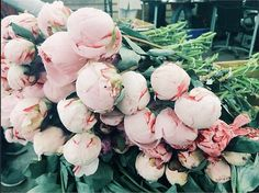 pale pink peonies before they've bloomed.