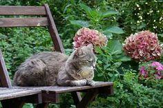 Outdoor Cat Kennel, Outdoor Cats, Adventure Cat, Cat Garden, Dream Garden, Garden Plants, Cool Plants, Cat Memes, Cats And Kittens