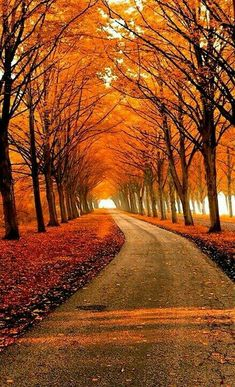 """""""Beauty is everywhere: Autumn tree tunnel"""" Beautiful Places, Beautiful Pictures, Beautiful Roads, Tree Tunnel, Autumn Scenes, Fall Pictures, Belle Photo, Beautiful Landscapes, Paths"""